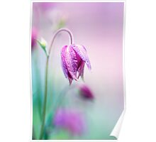 Floral soft tender  background from pink fresh cornflower  macro image Poster