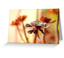 Aeonium at its finest Greeting Card