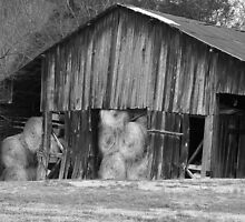 Working Barn by Shawn Chase