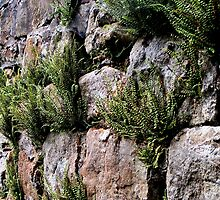 Wall with ferns by patjila