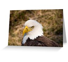 A very bald eagle. Greeting Card