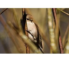 A Tiny Bird Amidst the Branches Photographic Print