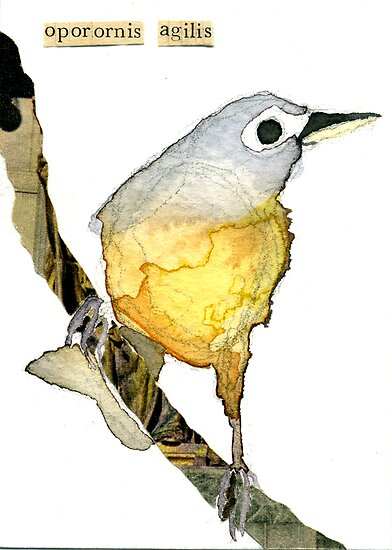 Oporornis Agilis (Connecticut Warbler) by Carol Kroll