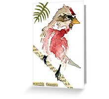 Acanthis Flammea (Common Redpoll) Greeting Card