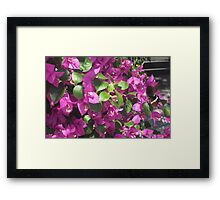 Ngong Ping butterfly Framed Print