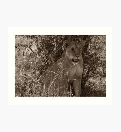 Masai Mara Lioness Art Print