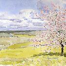 Cherry Blossom in the Dordogne by ian osborne