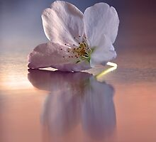 Springtime reflection by Denise Couturier