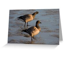 Light bellied brent goose Greeting Card