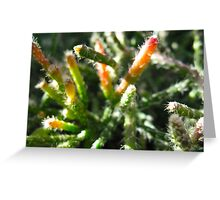Prickly Encounter Greeting Card