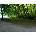 Plymbridge Woods Panoramic by DonDavisUK