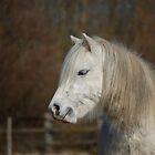 Pony's by Rayworsnop