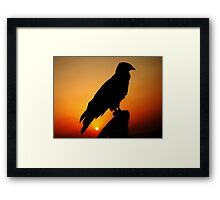 A FALCON WITH THE SUNSET Framed Print