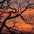 March sunset by Bluesrose