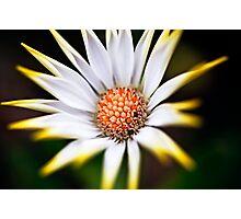white and yellow flower Photographic Print
