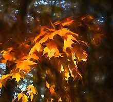 Spotlight on the Golden Maple Leaves - Fall Forest Impressions by Georgia Mizuleva