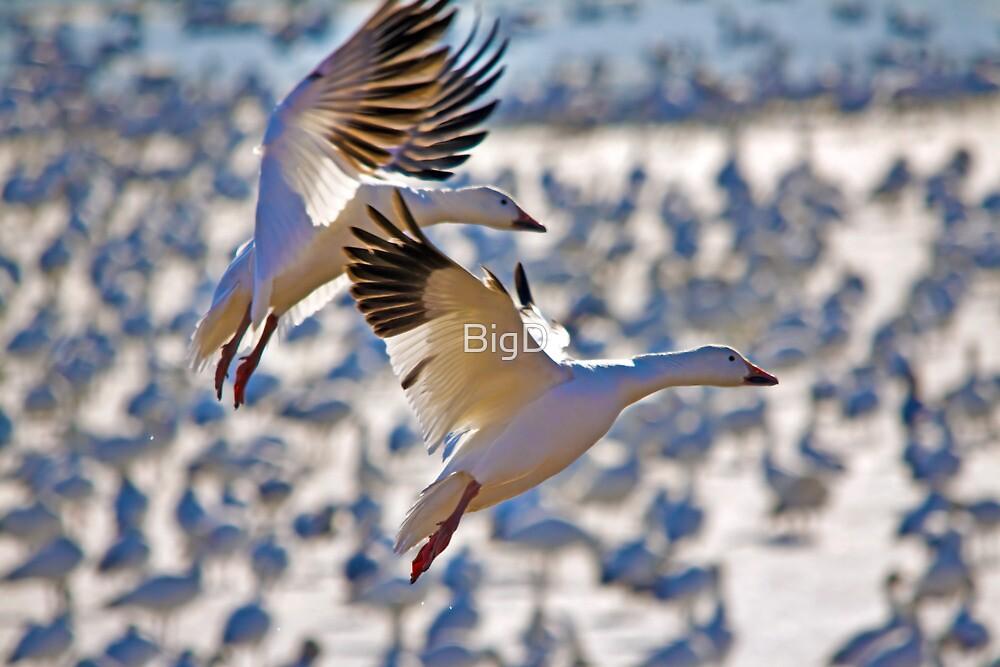 Smooth Landing by BigD