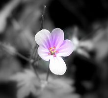 Tiny Pink Flower by Peter Holloway