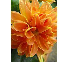 Orange Sorbet with Sprinkles Photographic Print