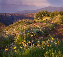 Last Light at Dowd Mountain Overlook by Kim Barton
