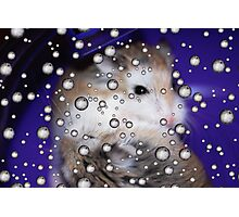 Hamsters Away Photographic Print