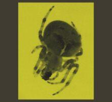 Arachnid by Carin Fausett