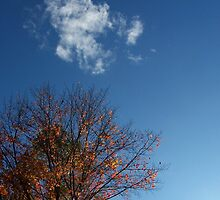 Fall Tree With Cloud by appke