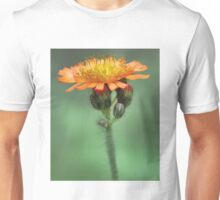 Orange Hawkweed -- Soft Afternoon Light Unisex T-Shirt