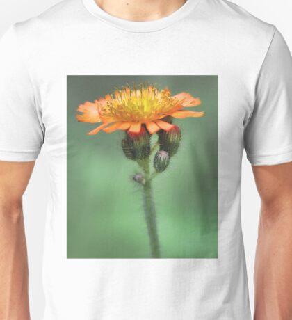 Orange Hawkweed -- Soft Afternoon Light T-Shirt