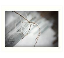 A White Wonder - snow/branch close-up Art Print