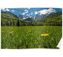 Julian Alps and Flower Meadow Poster