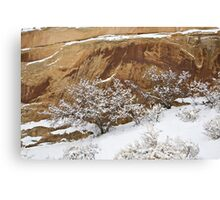 Snowball Trees Canvas Print
