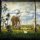 Baby Elephant Walk by SandyA
