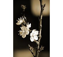 An Antique Spring Photographic Print