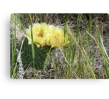 Prickly Pear Duo - Prairie Wildflower Series Canvas Print