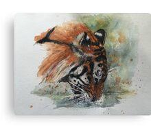 Drinking Tiger - Panthera Tigris Canvas Print