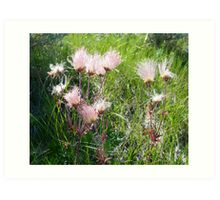 """Prairie Smoke"" (Geum Triflorum) - Prairie Wildflower Series Art Print"