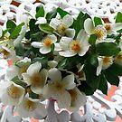 Flor de Ulmo.... by cieloverde