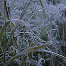Frosty Grass by Christopher Clark