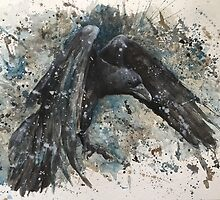 The Raven - Corvus corax by Morgan Campbell