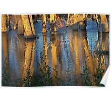Cottonwood Reflections Poster