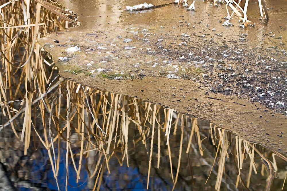 Winter Swamp by Kim Barton
