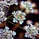 Grow like Wildflowers by Vicki Field