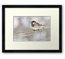 Snowy Sparrow Framed Print