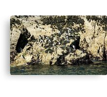 Seabird Rock Canvas Print