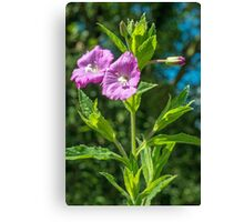 The Great Willowherb Canvas Print