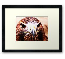 Andi- The Golden Eagle Framed Print