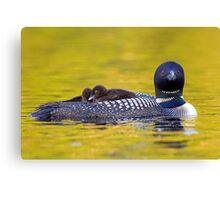 Ready for bed - Common loons Canvas Print