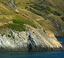P1030501_Penguin_Colony_Otago_Peninsula_Dunedin_NZ by Keith Richardson