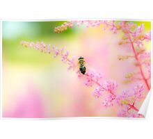 Bee on Pink Poster